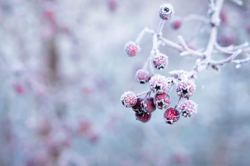 φύλλα εργασίας για το χειμώνα